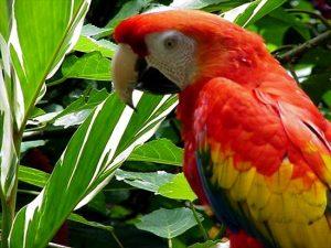Переезд на Коста-Рику